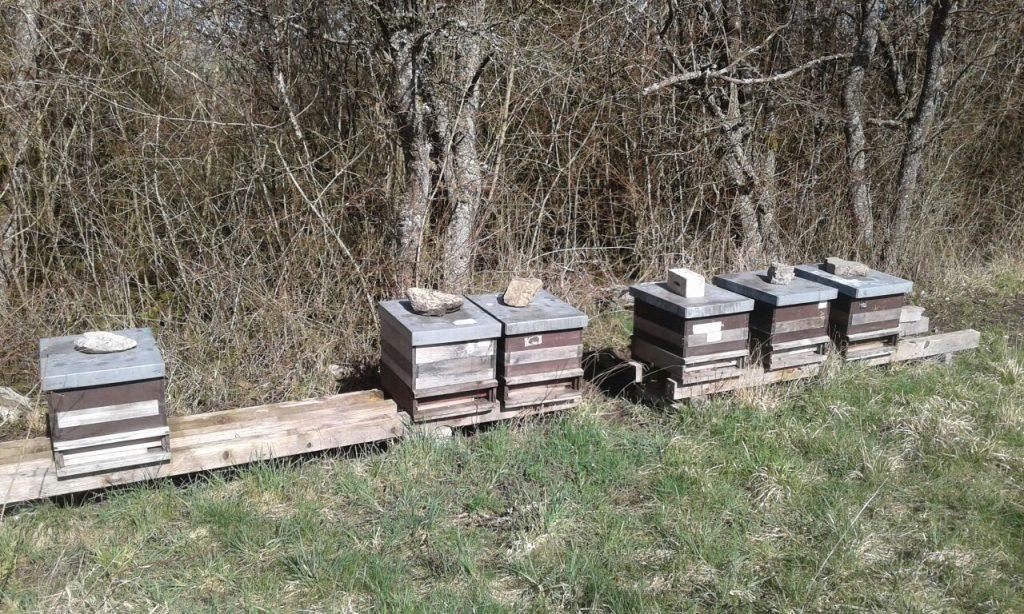 Bienenvölker bei Ballweiler im Bliesgau