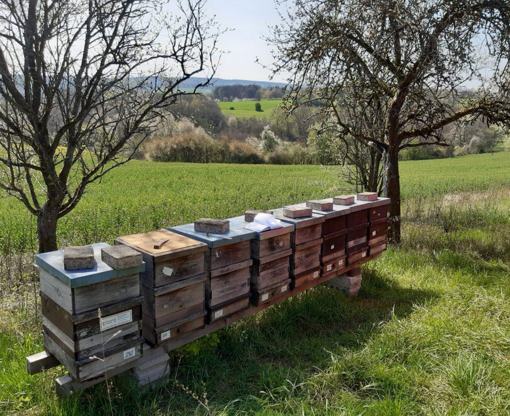 Bienenstand im Frühling
